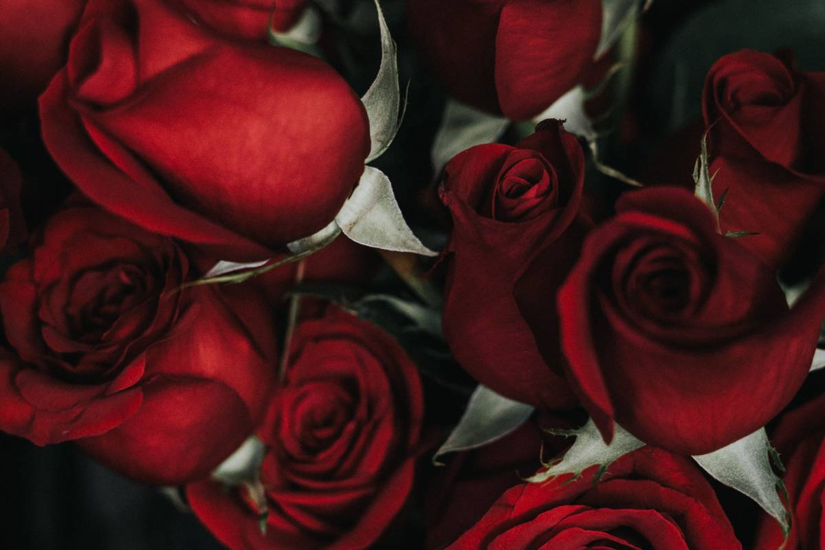 Valentine's Day 2020 events in Durham to share with the one you love