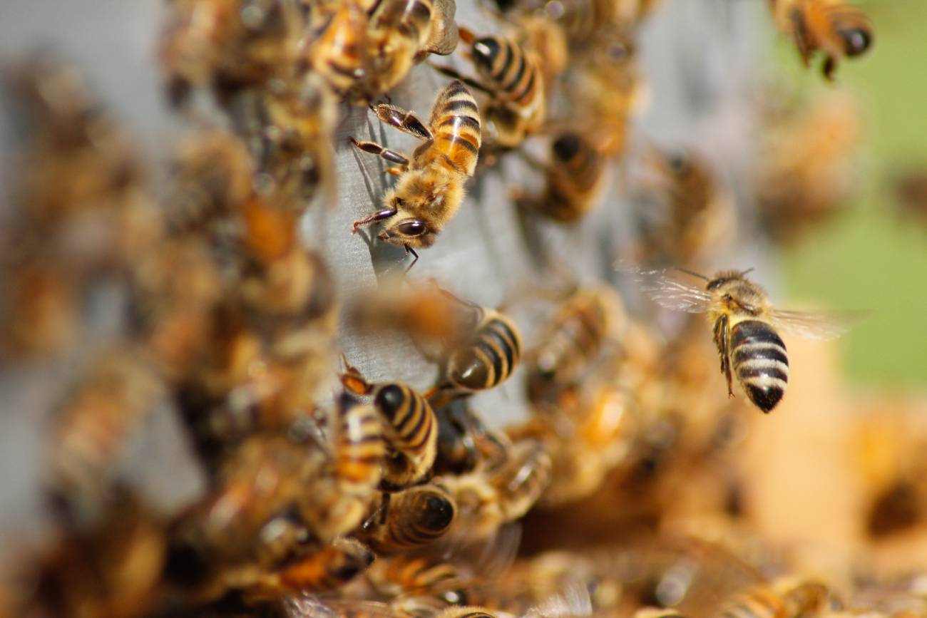 Durham beekeeping course returns to St Mary's College in early June