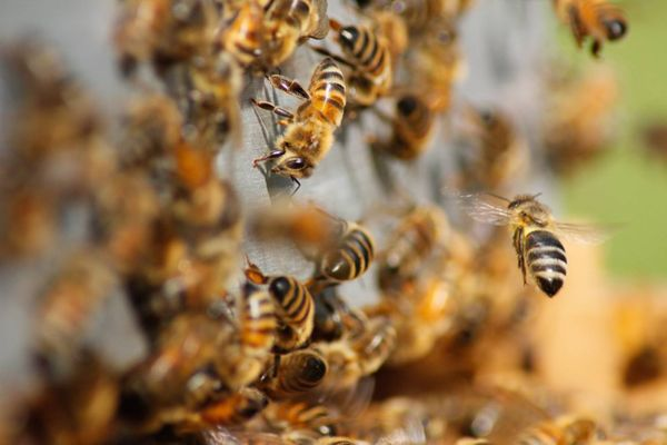 St Mary's College to offer one-day Durham beekeeping experience